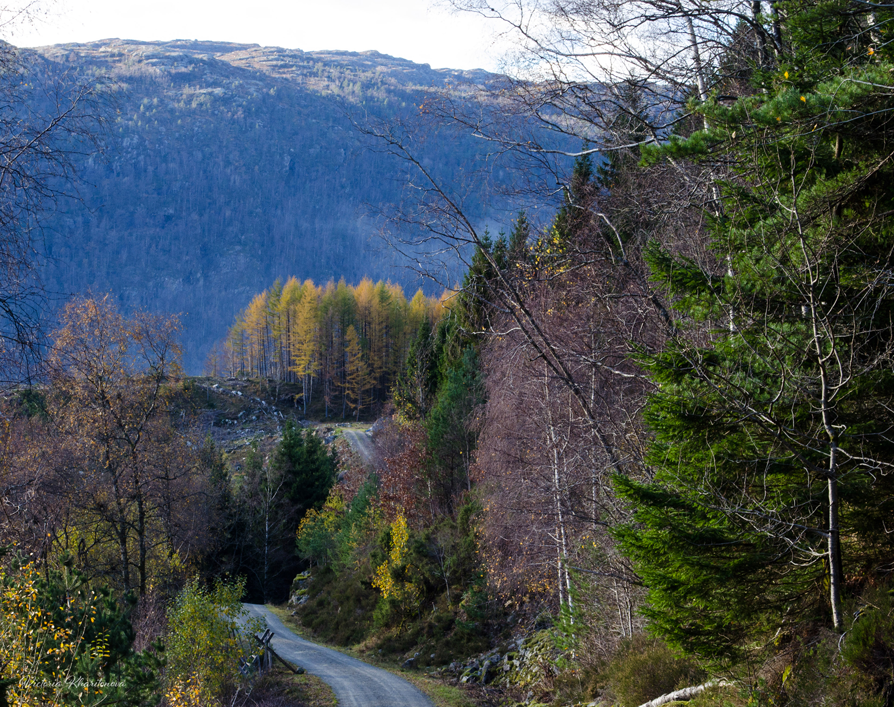 Ruberget